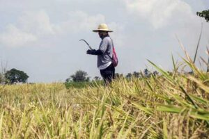 DoF wants to wean crop insurance firm off subsidies, expand coverage